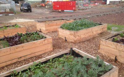 Our Abundant Winter Farm